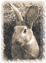 [Image: conejo.jpg]
